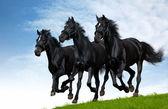 Black horses — Stock Photo