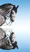 Dapple-gray paard — Stockfoto