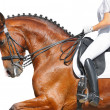 Dressage - bay horse — Stock Photo