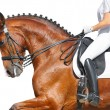 Dressage - bay horse — Stock Photo #1252753