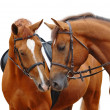 Two sorrel horses — Stock Photo