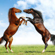 Stock Photo: Battle horses