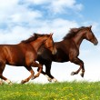 Stock Photo: Horses gallop