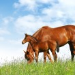 Stock Photo: Mare and foal in field
