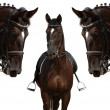 Black horses — Stock Photo #1258925