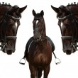 Stock Photo: Black horses