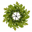 Wreath out of oaken twig - Stockfoto