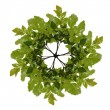 Wreath out of oaken twig - Stock Photo