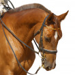 Dressage, sorrel horse — Stock Photo