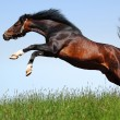 Stock Photo: Arabistallion jumps