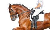 Dressage - bay horse — Stock Photo