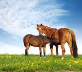 Mare and foal in a field — Stock Photo