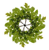 オーク材の枝の花輪 — ストック写真