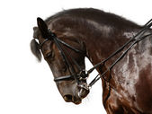 Dressage, black horse — Stock Photo