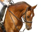 Dressage, sorrel horse — Stock Photo