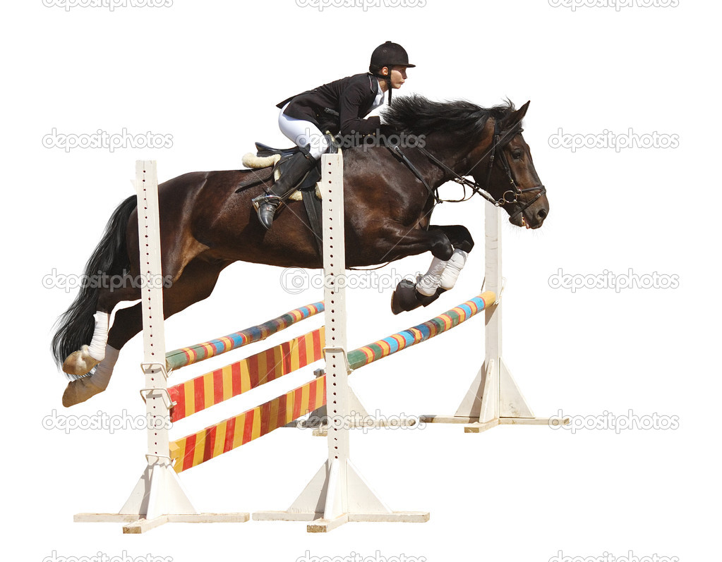 Show jumping - isolated on white  Stock Photo #1256527
