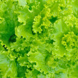 Green salad - Foto de Stock