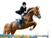 Equestrian jumper — Stock Photo