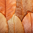 Texture of leaves — Stock Photo