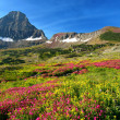 Alpine Meadows - Foto de Stock