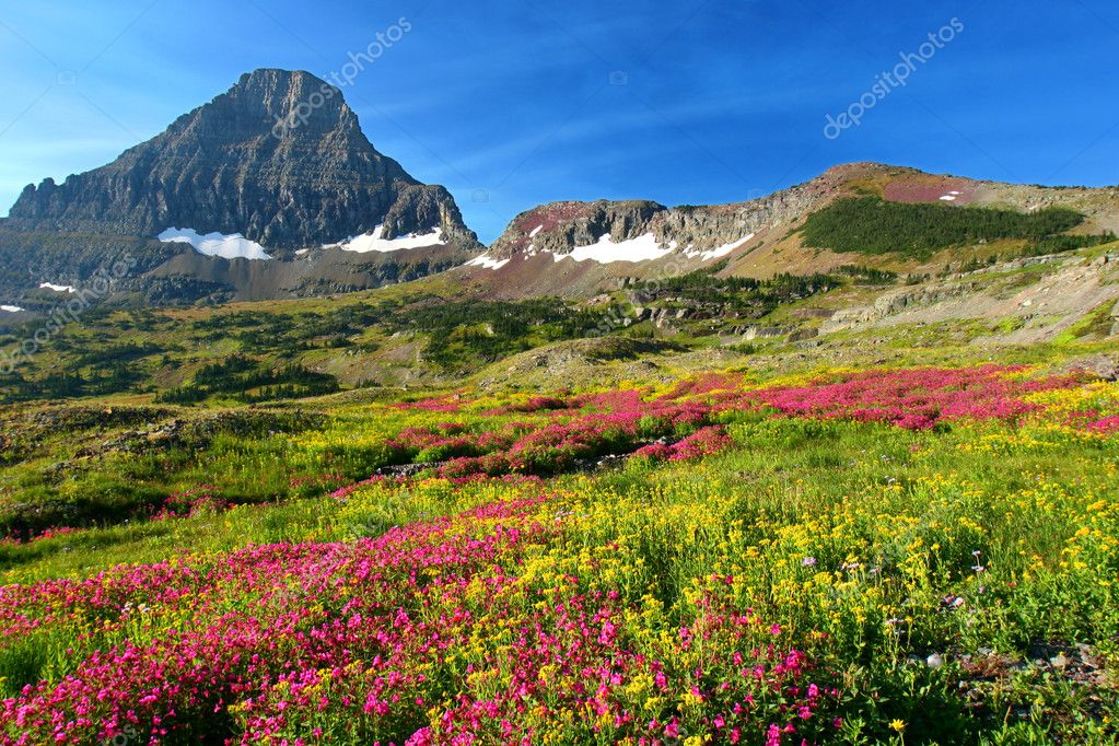 Hidden Lake Trail, Logan Pass, Glacier National Park, Montana, USA  Stock Photo #1174755