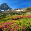 Alpine Meadows — Stock Photo #1213782