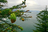 Oregon Coast — Stock Photo
