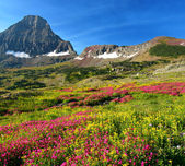 Alpine Meadows — Stock Photo