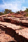 Deserto rosso — Foto Stock