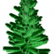 Beautiful fir — Stock Photo