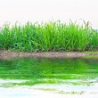 Green grass near the lake — Stock Photo