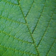 Leaf closeup — Stock Photo #1323233
