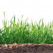 Grass growing on clay - Stock Photo