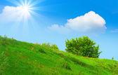 Summer sunshine — Stock Photo