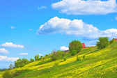 Nature in the spring — Stock Photo