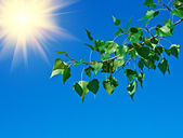 Tree branch on a background of blue sky — Stock Photo