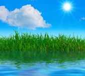 Perfect summer nature — Stock Photo