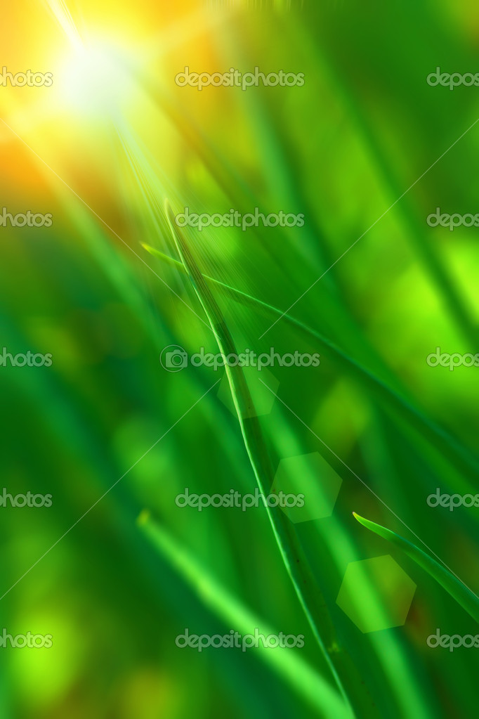 Abstract background on the subject of a summer nature — Stock Photo #2036839