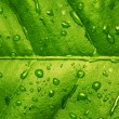 Royalty-Free Stock Photo: Green leaf with water drops textured bac