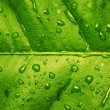 Green leaf with water drops textured bac - Photo