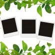 Green leaves frame and tree blank photos — Stock Photo