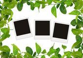 Feuilles vert cadre et arbre blancs photos — Photo