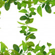 Green leaves frames — Stock Photo