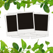 Green leaves frame and tree blank photos — Stockfoto #1240739