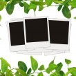 Green leaves frame and tree blank photos — Stock Photo #1240739