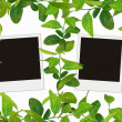 Green leaves frame and blank photos — Stock Photo