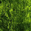 Green natural bark background — Stock Photo #1248041