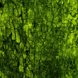 Stock Photo: Green natural bark background