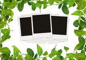 Groene bladeren frame en boom lege foto 's — Stockfoto
