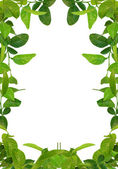 Green leaves frame - similar images avai — Stock Photo